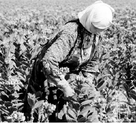 Gıda üreten kadınlar /  Özge Güneş