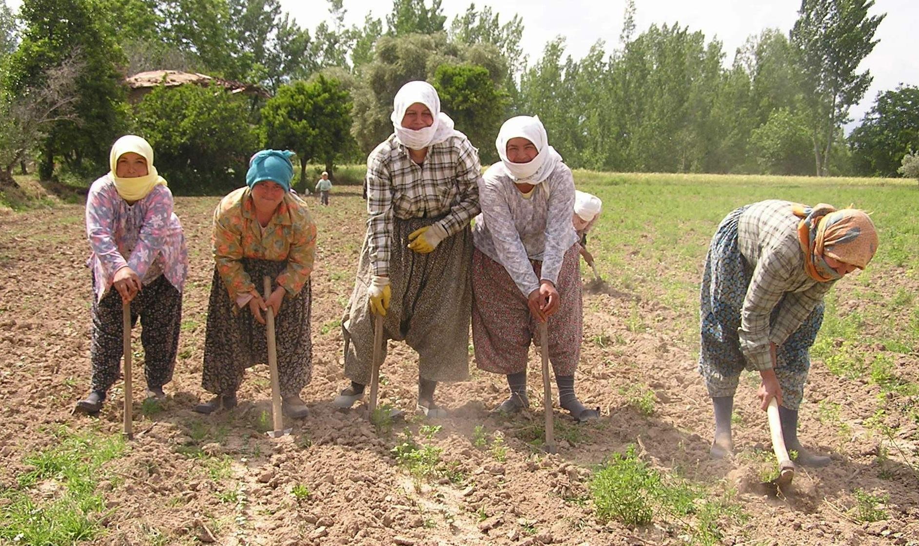 Köylüler Endüstriyel Tarıma Nasıl Alıştırıldılar?  / Nihat Fırat