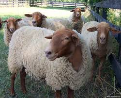 Rençber Gözüyle - Hayvancılık düzelmiyor! / Abdullah Aysu