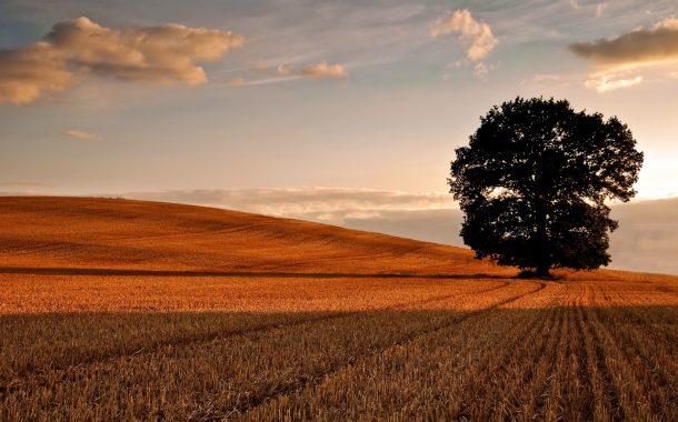 Türkiye, tarımını boşlamakla ciğerindeki havayı inkâr etti / Abdullah Aysu