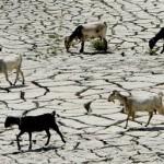 Rençber Gözüyle - Çiftçi borçları ve afetler / Abdullah Aysu
