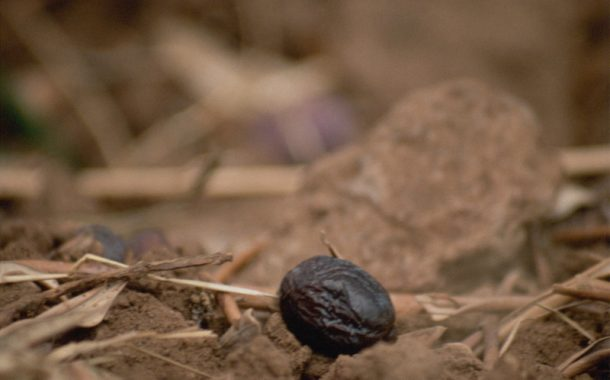 Yerel Seçimlere Giderken-III / Gıda Krizinin çözümü Gıda Egemenliği'nden geçer / Adnan Çobanoğlu