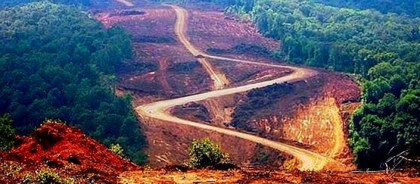 Ormanlar yok olurken…/  Özge Güneş