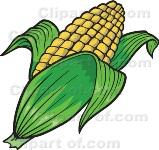 Hububat Sen: açıklanan mısır fiyatı emeğin karşılığı değil!