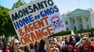 GDO karteli Monsanto'nun yeni hedefi dünya tohum arzını tamamen kontrol etmek