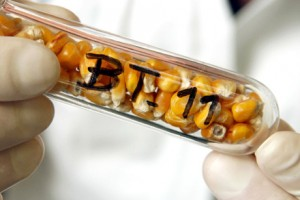 Bir GDO devinin DNA'sı: Monsanto / Ayşe Bereket