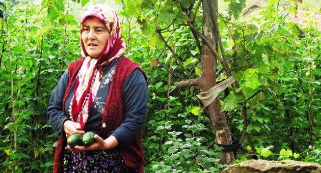 Küçük aile çiftçilerinin siyasilerden talepleri / Abdullah AYSU