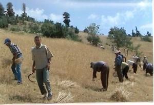 Tarım karnemizi aldık yine sınıfta kaldık /  Ahmet Atalık
