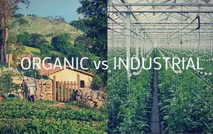 """Endüstriyel Tarımın Bir Başka Biçimi:""""Sertifikalı Organik Tarım.""""  / Adnan ÇOBANOĞLU"""