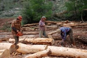 Ağaç kesimi özel sektöre devrediliyor