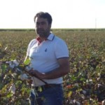Pamuk Fiyatlarının Düştü Çiftçi Mağdur
