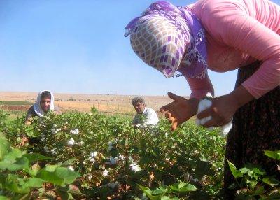 Bakan Çelik açıkladı: Çiftçilere ödemeler bugün başladı