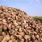 Çiftçi 2015′te ne ekecek? / Ali Ekber Yıldırım