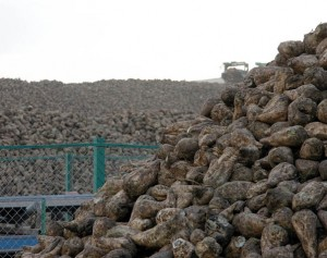 Adapazarı Şeker Fabrikası'nda 'kota' sorunu