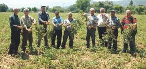 Ekmek üreticileri: Tarım Bakanlığı kamuoyunu aldatıyor