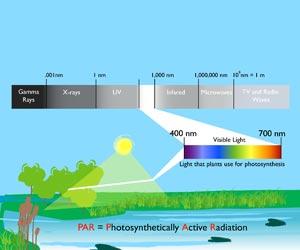 Parçacık Film Teknolojisi ve Kaolin - Fotosentez ve Güneş Etkileri/Meyvelitepe
