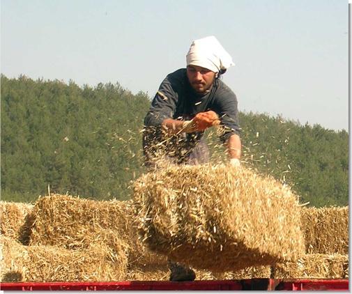 Tarımda üretici fiyatları arttı
