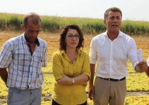 CHP'li Sarıbal; Üzüm çiftçinin elinden yok pahasına gidiyor!
