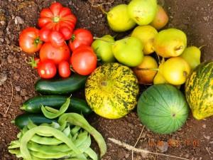 2012 Yılında Tarım: Üretim Geriliyor, İthalat Artıyor/Necdet ORAL*