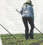 Tarım sigortası kapsamındaki zararlar için çiftçiye yardım yok