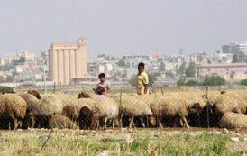 TMO, Suriye'den 20 bin ton hububat alacak, taşıma için 1,3 milyon lira harcayacak