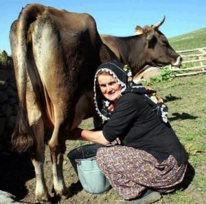 Süt çalkalamaya gelmez! / Abdullah AYSU