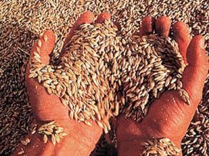 Tarımsal üretimimiz azalıyor, bu sizi ne kadar ilgilendiriyor?/   Abdullah AYSU