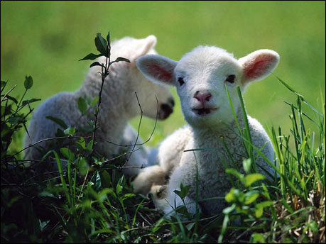 Hayvan haklarının kapsamı / Özge Güneş