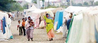 Fındığı göçmen işçiler toplar