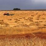 AKP'nin tarım politikası, yabancı çiftçiye kazandırdı
