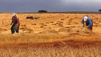 Fransa'da Çiftçiler 400 Traktörle Havalimanı Projesine Karşı Eylem Düzenledi
