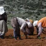 Kadınların yüzde 70'i tarım sektöründe çalışıyor