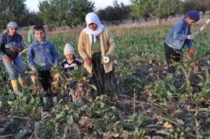 Tarım ve inşaat işsizliğe yüzde 8'le 'dip' yaptırdı