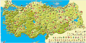 Yerel üret, yerel tüket; ama nasıl?  / Tayfun Özkaya