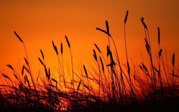 Güneş umuttan doğar / Abdullah Aysu