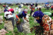 Tarımda 2018 Türkiye'si / Abdullah Aysu ile söyleşi