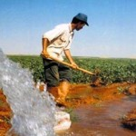 Çiftçi değilse kim? /  Abdullah AYSU