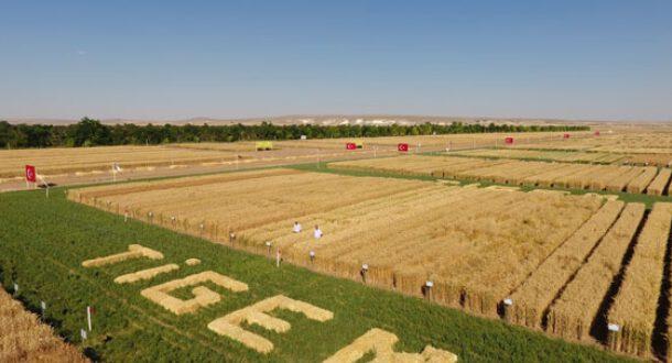 TİGEM tarımsal destekten mahrum bırakıldı