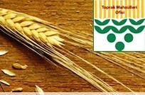 TMO'nun buğday ile arpa, çavdar, yulaf ve tritikale fiyatları belli oldu.
