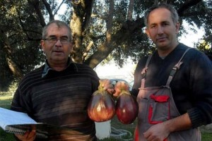 'NEREDE o eski kokulu domatesler' diye soranlara müjde...
