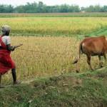 'NBŞ üreticileri kazanacak çiftçi ve tüketici kaybedecek'