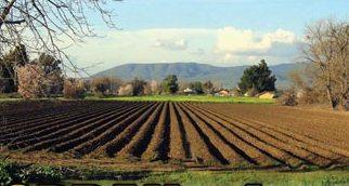 Tarım ve Gıda Bakanlığı kuruluyor