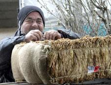 140 bin üretici Tekel'e tütün verip parasını Hazine'den alacak