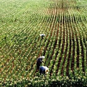 Rençber Gözüyle-Mevsimlik tarım işçileri -II/Abdullah Aysu