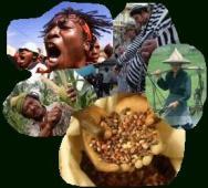 Küçük Ölçekli Sürdürülebilir Köylü/Aile Tarımı Dünyayı Soğutuyor