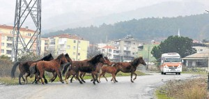Çeşme'de taş ocağı isyanı