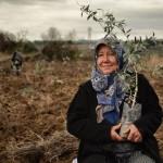 Yırca'ya termik santral iptal edildi, olan 6 bin zeytin ağacına oldu
