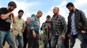 Termik Sevdası Tam Gaz, Kırkağaç'ta 600 Bin Zeytin Kesildi