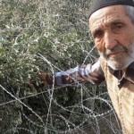 Hükümetin zeytincilere savaş ilanı / Abdullah AYSU