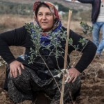 Yırca'da Fidanlar Soma'nın Madenlerine Uzanacak
